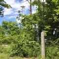 Photos: 20200620かみのやま温泉クアオルト健康ウォーキング 西山コースIMG_0899