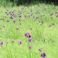 Photos: 20200620かみのやま温泉クアオルト健康ウォーキング 西山コースIMG_0933
