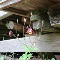 20200627白鷹山(しらたかやま)IMG_1209