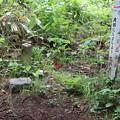 Photos: 20200627白鷹山(しらたかやま)IMG_1188