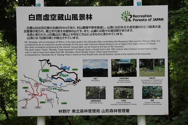 Photos: 20200627白鷹山(しらたかやま)IMG_1059