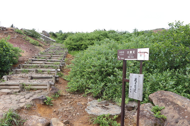 Photos: 20200718蔵王山コマクサ姫に逢いに (b'∀゚*)IMG_1527