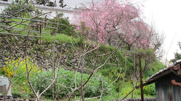 Photos: 17.04.10.真田信繁屋敷跡説地(九度山町)石垣