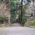 Photos: 如意輪寺(吉野町吉野山)山門より参道