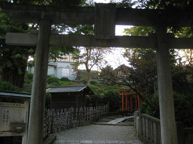 根津神社(文京区根津)乙女也