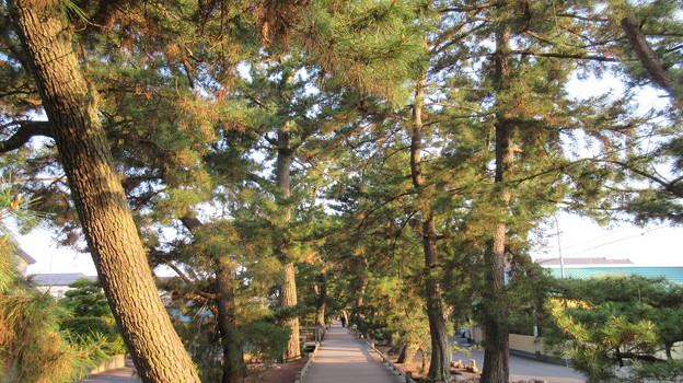 御穂神社(清水区)神の道