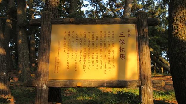 三保の松原(清水区)