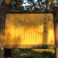 写真: 三保の松原(清水区)