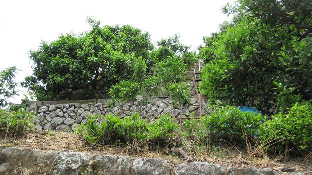 石脇城(焼津市)八幡郭下段