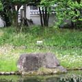 Photos: 田中城下屋敷(藤枝市)築山跡