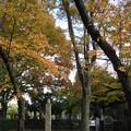 Photos: 10.11.11.天王寺五重塔跡(都立谷中霊園)