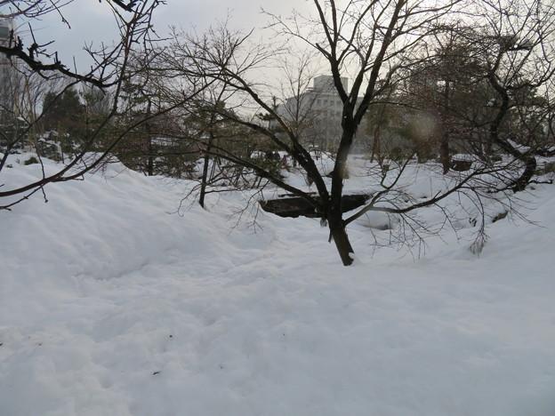 富山城(市営富山城址公園)池そして橋…