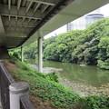 Photos: 11.06.23.弁慶堀(港区元赤坂)