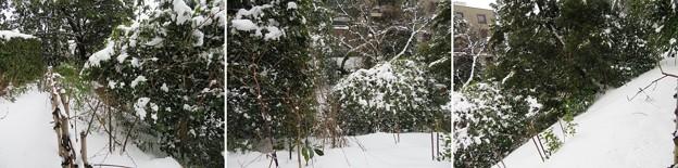 金沢城(石川県営 金沢城公園)白鳥堀(外堀)