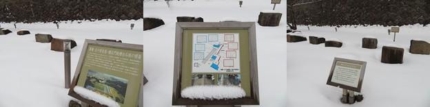 金沢城(石川県営 金沢城公園)石垣展示