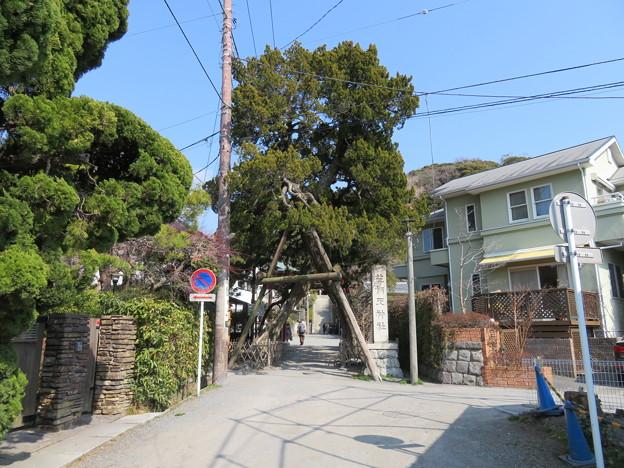 荏柄天神社(鎌倉市)松と二の鳥居