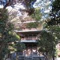 Photos: 龍口寺(藤沢市)五重塔