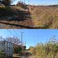 Photos: 多古城(香取郡多古町)