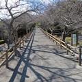 Photos: 館山城(館山市)鹿島堀跡