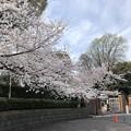Photos: 18.03.26.学習院大学正門(豊島区目白)