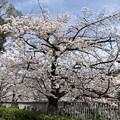 写真: 18.03.26.面影橋より(新宿区・豊島区)