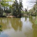 氷川神社(大宮区)神池