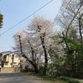 18.03.28.中山神社(見沼区)