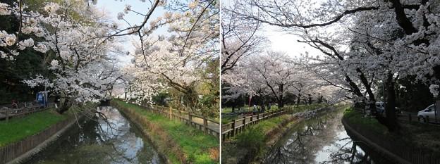 18.03.28.氷川女体神社(見沼区)見沼用水?