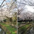 写真: 18.03.28.氷川女体神社(見沼区)見沼用水?