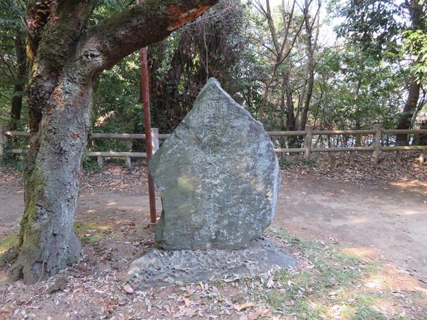 氷川女体神社(見沼区)磐船祭祭祀遺跡