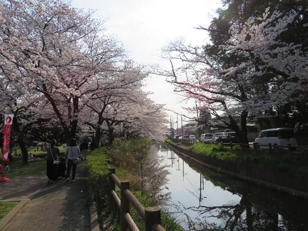 18.03.28.氷川女体神社前(見沼区)見沼用水?