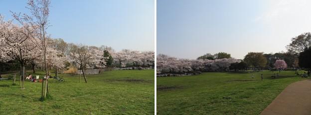 18.03.28.見沼氷川公園(見沼区)