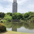 写真: 新宿御苑(新宿区)