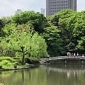 Photos: 新宿御苑(新宿区)