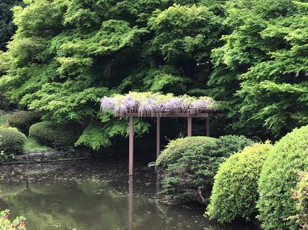 18.04.12.新宿御苑(新宿区)