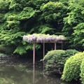 写真: 18.04.12.新宿御苑(新宿区)