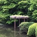 Photos: 18.04.12.新宿御苑(新宿区)