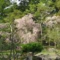 18.04.23.成慶院(高野町)