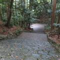 写真: 倭姫宮(伊勢市)大鳥居側参道