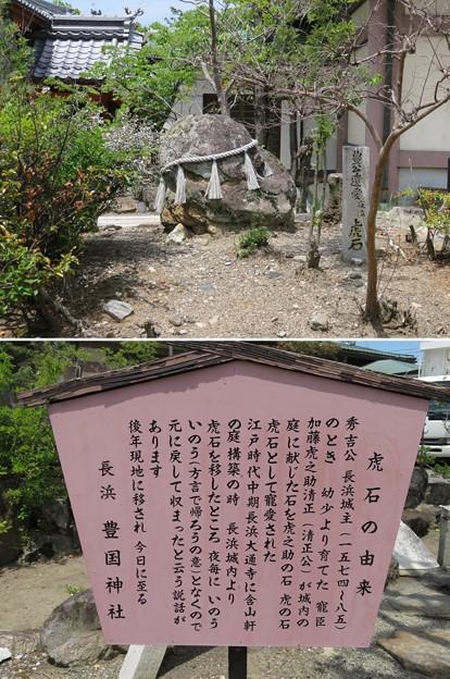 長浜城(長浜市)豊國神社 虎石