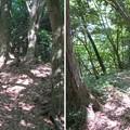 Photos: 虎御前山城(長浜市)木下秀吉陣跡