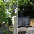 Photos: 姉川古戦場(長浜市)姉川戦死者之碑