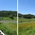 写真: 壬申の乱古戦場(関ケ原町)