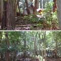 写真: 関ヶ原合戦 小早川秀秋陣跡/松尾山城(関ケ原町)山之神神社