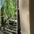 清流と名水の城下町 郡上八幡(岐阜県郡上市)宗祇水