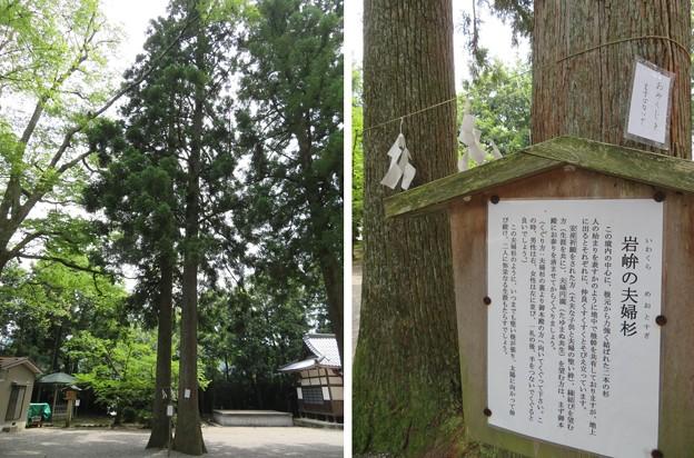 雄山神社 前立社殿(立山町岩峅寺1)夫婦杉