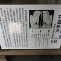 Photos: 雄山神社 前立社殿(立山町岩峅寺1)狛犬