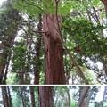 亀山城(増山城郭群。砺波市)高坪里神社