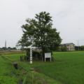 Photos: 伝 長尾為景塚(砺波市)