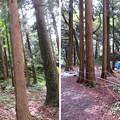 写真: 七尾城(石川県)桜馬場